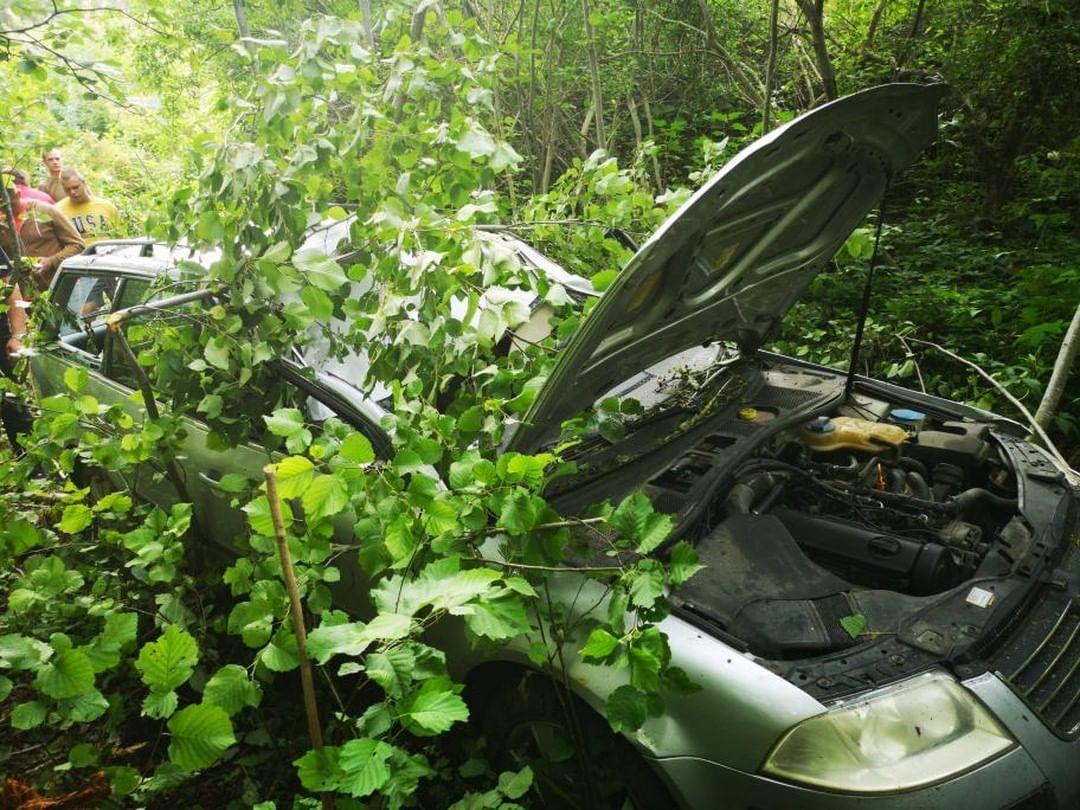 Pēc sadursmes ar alni iet bojā autovadītājs