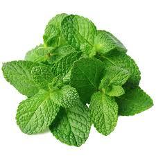 pudina-mint-leaves