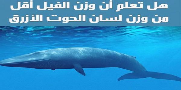 وزن لسان الحوت الأزرق