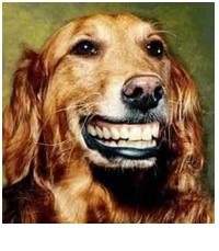 healthy canine teeth