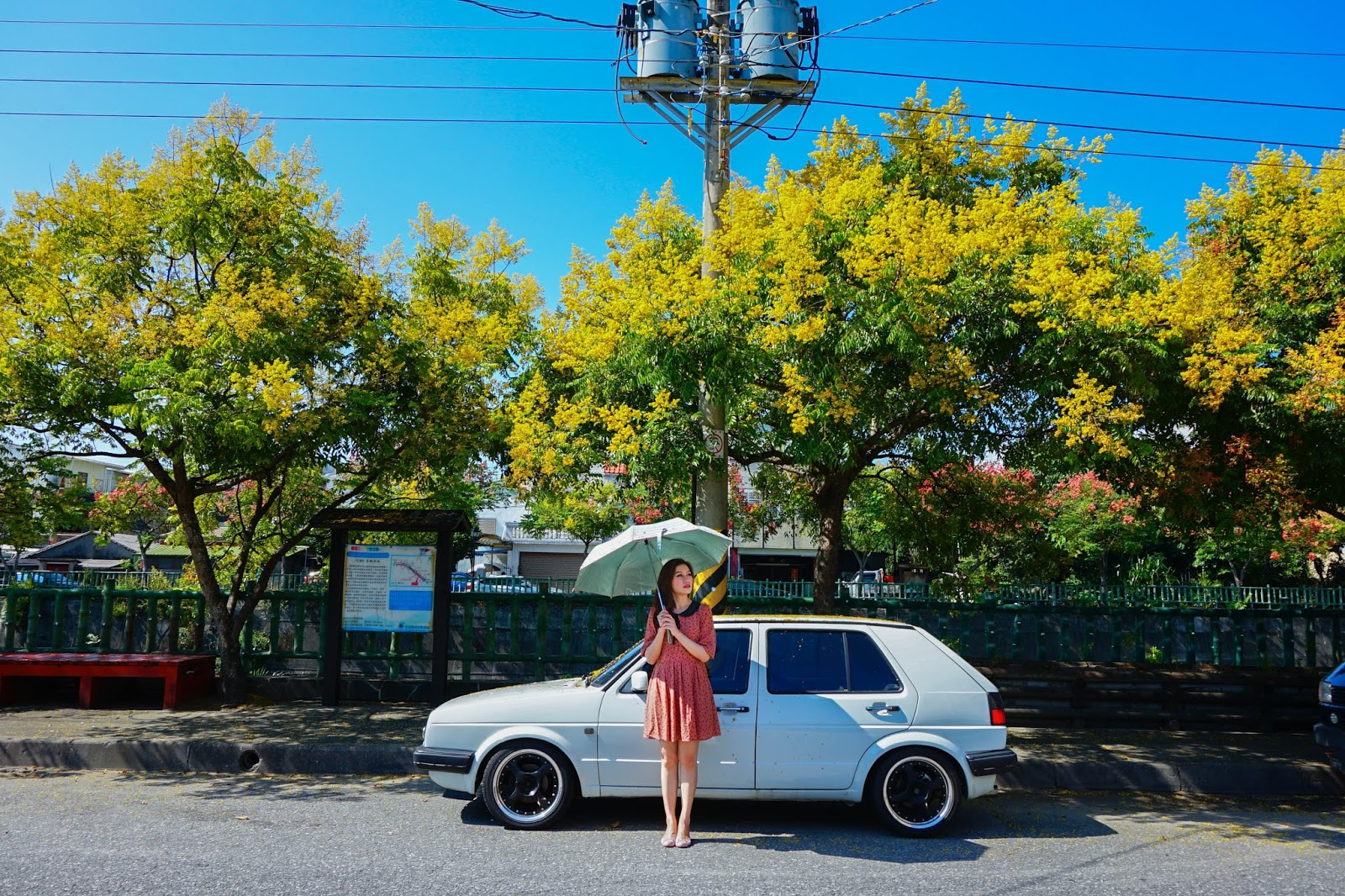 beautyanxiety.com-Flame%2BGold-rain%2BTree-DSC02653-beautyanxiety.com-Flame Gold-rain Tree
