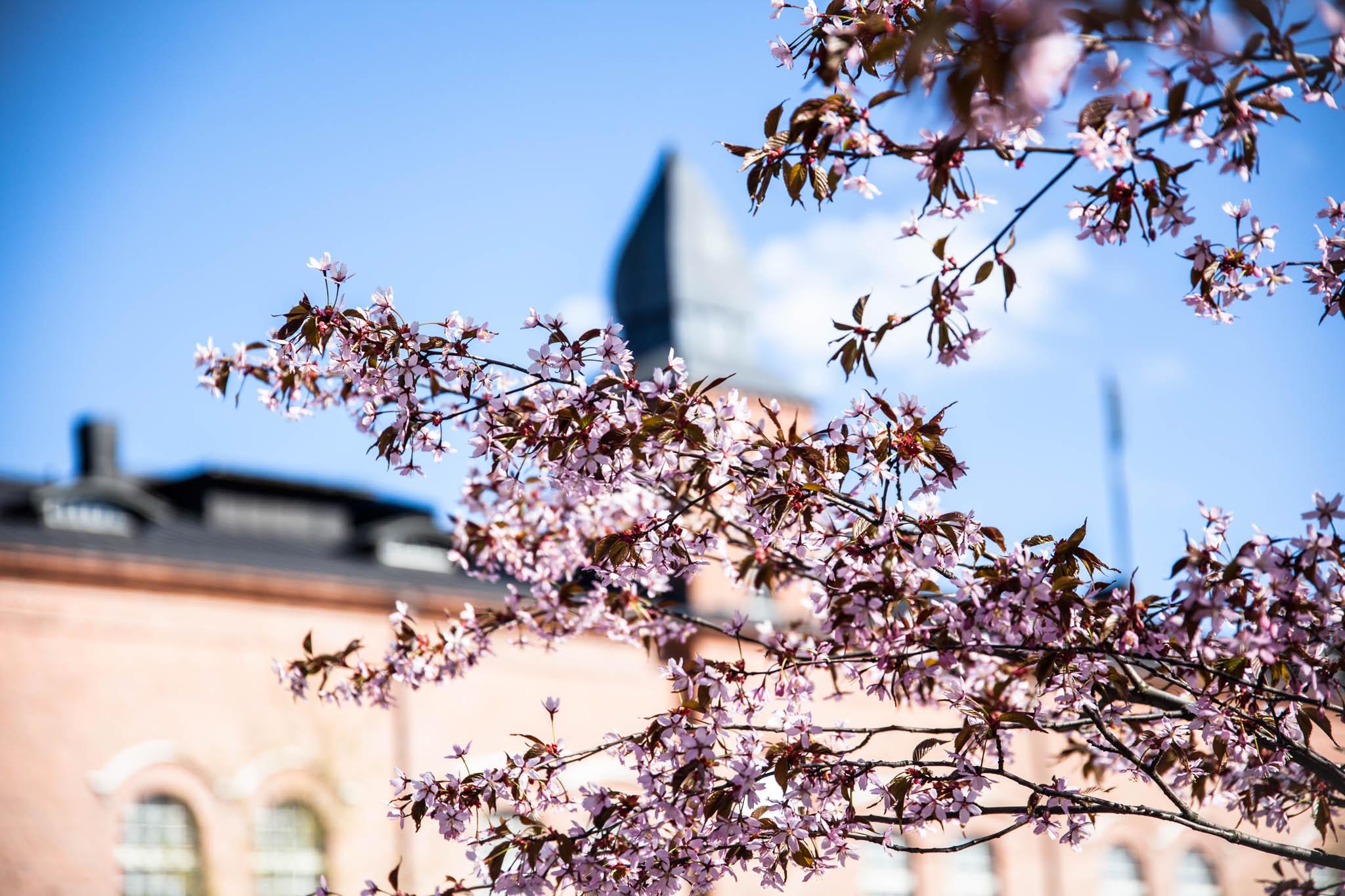 kevät kukat kukkaloisto