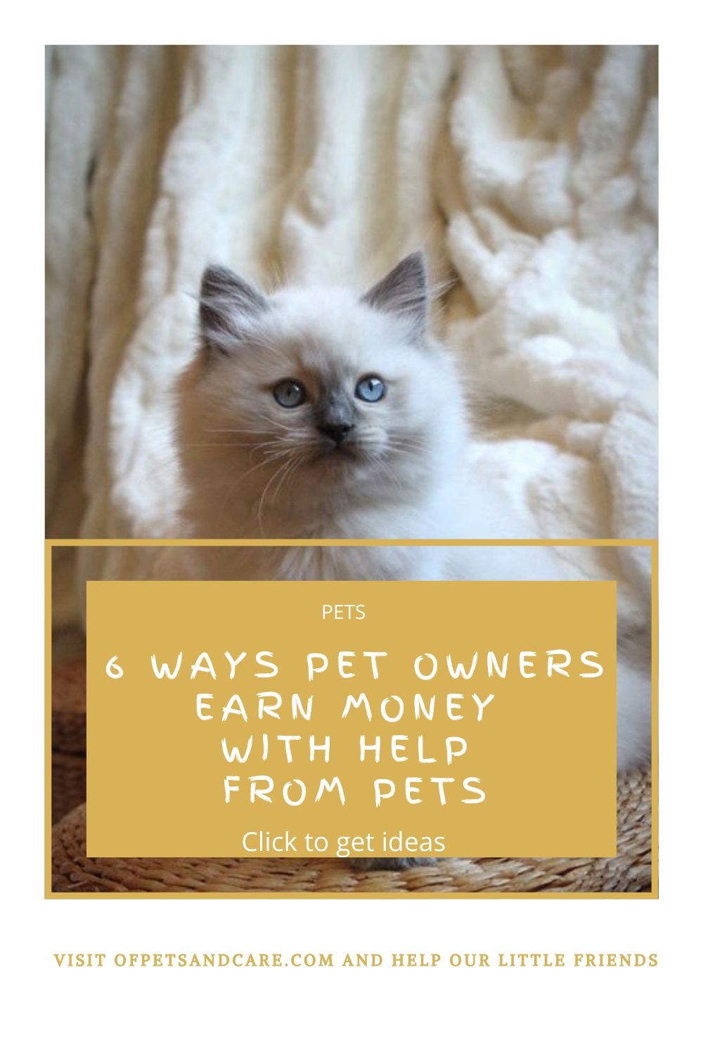 pet photography, beautiful ragdoll kitten