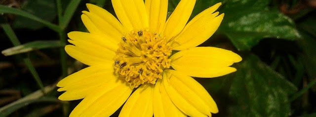 Yellow flower Facebook cover photos