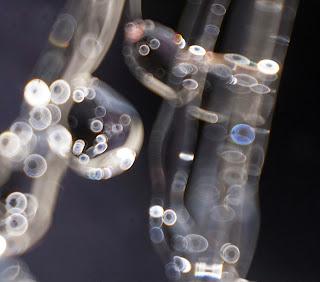 holes in orbs