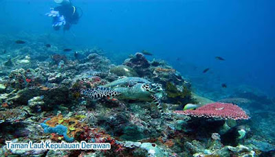 Taman Laut Kepulauan Derawan