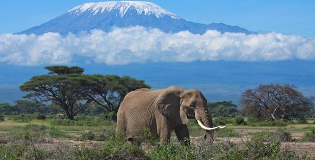 Elephant near Kilimanjaro, Tanzania