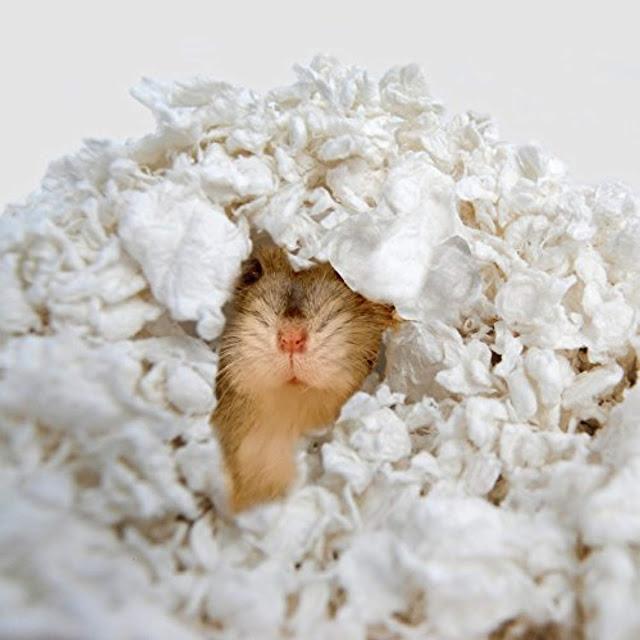 Membuat Alas Kandang (Bedding) Hamster dari Kertas