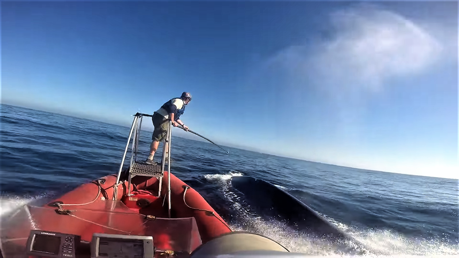 Stanford researchers recording of blue whale heart rate