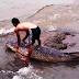 Warga Temukan Ikan Raksasa, di Danau Toba Yang Semakin Surut