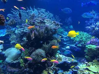 Reanudan #turismo en dos zonas de arrecife en Cozumel