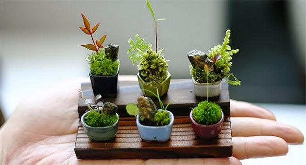 cho-mini bonsai