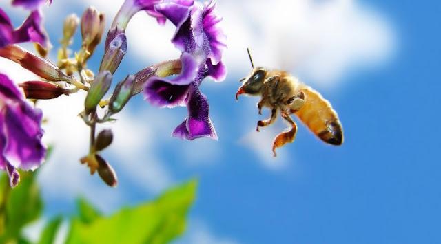 Μελισσοκομία: Τα μυστικά του υγρού χρυσού