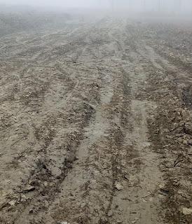 खीरी : सरकारी जमीनों पर कब्जे की मची होड़,तहसील प्रशासन ने बांधी आंखों पर पट्टी लेखपाल काट रहे मलाई