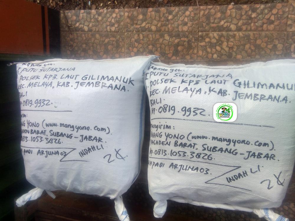 Benih Padi yang dibeli   I PUTU SUTARJANA Jembrana, Bali.   (Setelah packing karung).