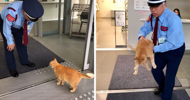 10 Photos Of Two Cats That Have Been Trying To Sneak Into A Museum In Japan For Years