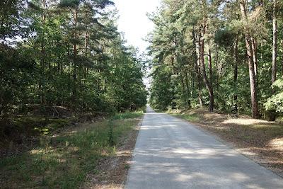 Puszczańska droga leśna