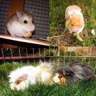 Ashlin, Juno, Luna and Cozmo.