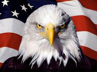 Eagle with usa flag desktop images