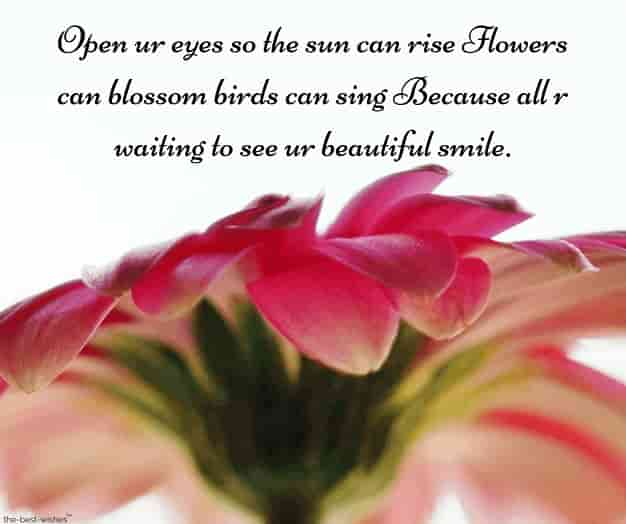 romantic good morning sms with flower