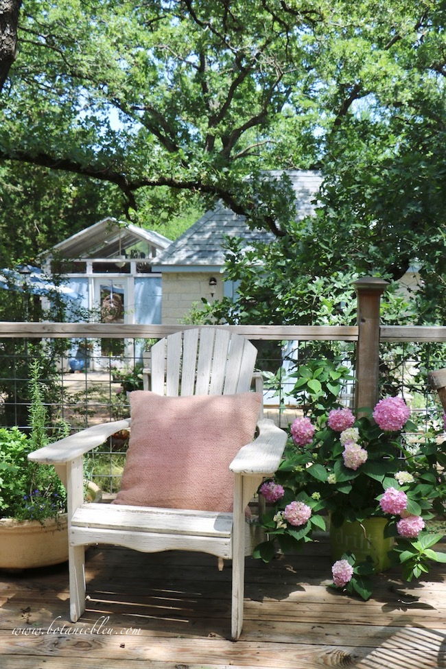 Pink Hydrangeas in Containers on Shady Deck with Adirondack chair