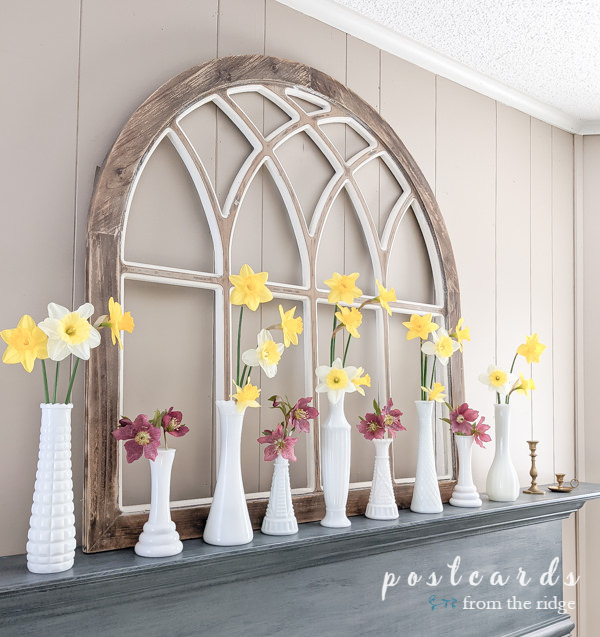 yellow daffodils in vintage white milk glass vases on blue mantel