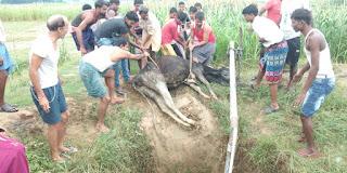 कुएं में गिरी गाय को ग्रामीणों ने बचाया | #NayaSaberaNetwork