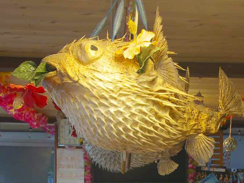 Tetraodontidae,pufferfish,blowfish,lamp