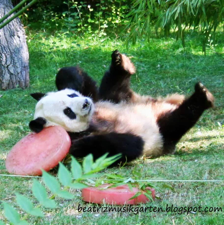 Celebrando El Cumpleanos Del Oso Panda Y Actividades Homeschooling