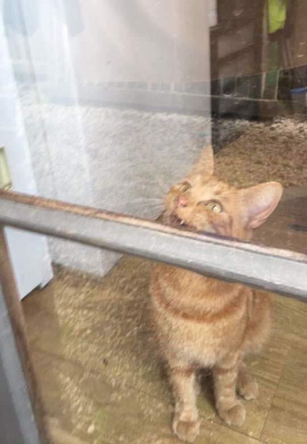 Gato inteligente logra que su mamá humana vuelva a entrar en la casa después de que se quedara fuera