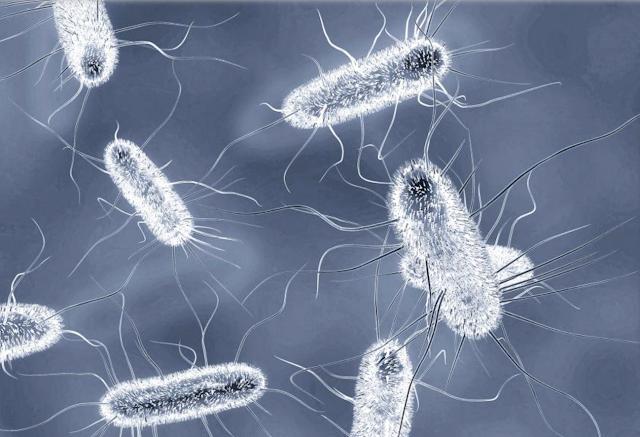 Koronovirüs salgını Dünya Ticaretini Ne kadar etkileyecek ? - Günümüz koşulları