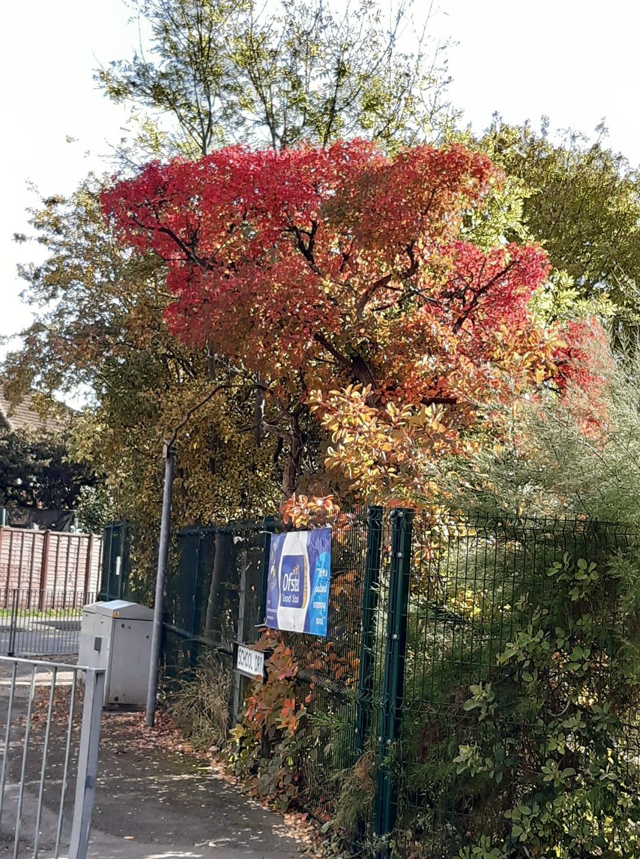 tree by school