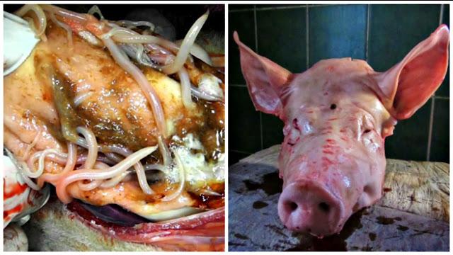 لحم الخنزير الديدان الشريطية