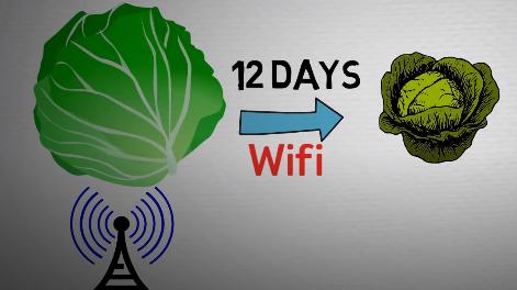 Tác hại của sóng wifi tới thực vật