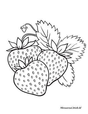 Mewarnai Gambar Strawberry : mewarnai, gambar, strawberry, Mewarnai, Gambar, Strawberry, Dunia