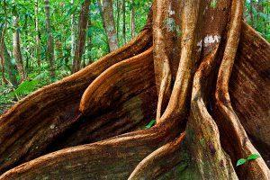 sifat sifat akar tanaman