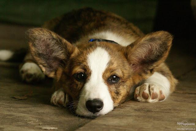как влияют эфирные масла на домашних питомцев, вред эфирных масел для кошек, вред эфирных масел для собак, как безопасно использовать эфирное масло для очистки дома, эфирное масло и коронавирус, антибактериальные средства для уборки дома, эфирные масла для уборки дома, Симптомы которые проявляет собака при отравлении эфирными маслами, Самые токсичные масла для собак, Воздействие эфирных масел на собак, Симптомы, которые проявляет кошка при отравлении эфирными маслами:, Домашние питомцы и эфирные масла: будьте осторожны!, Воздействие эфирных масел на кошек, Некоторые из самых ядовитых эфирных масел для кошек, Влияние эфирных масел на организм питомца при ароматизации помещений, животное, питомцы, ароматерапия, кошки, аллергия, домашние,