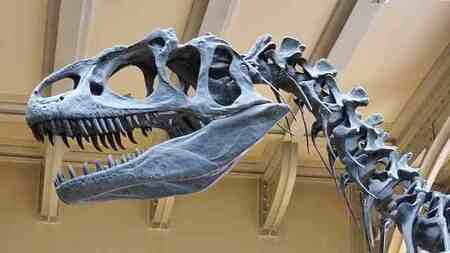 Australia's largest dinosaur species Discovered, Scientists Confirm, among biggest in World