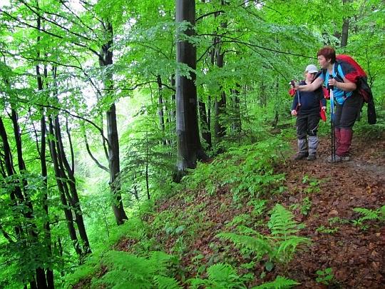 Na stromych stokach Kamiennej Góry ponad Uroczyskiem Zwezłyska.