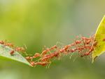 Pelajaran Berharga yang Bisa Kalian Ambil dari Semut