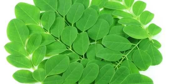 khasiat daun kelor untuk tubuh.