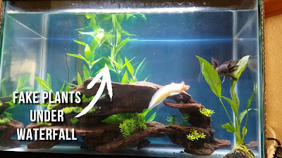 add decor under the filter output to disperse the outflow in an axolotl aquarium