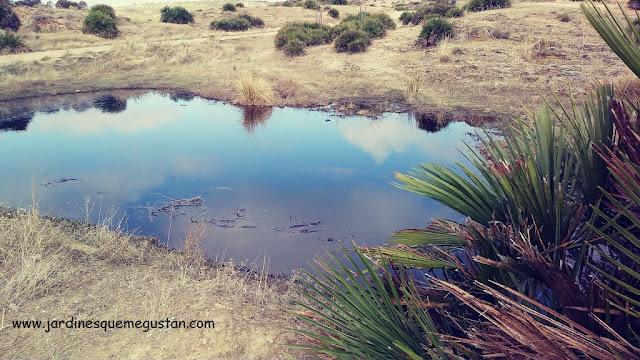 El cielo reflejado en un estanque