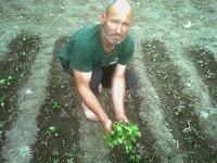 plantarea ardeiului
