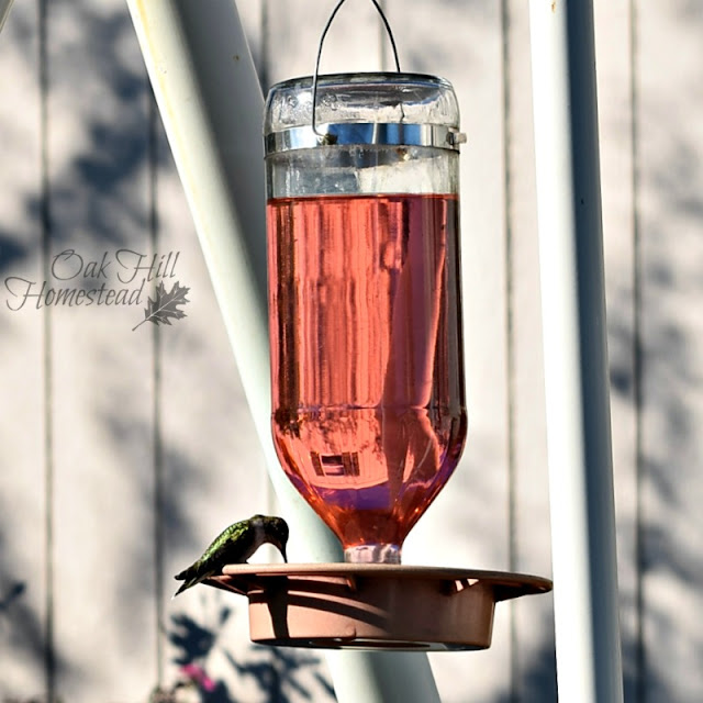 Glass hummingbird feeders are more durable than plastic, but plastic is less expensive.