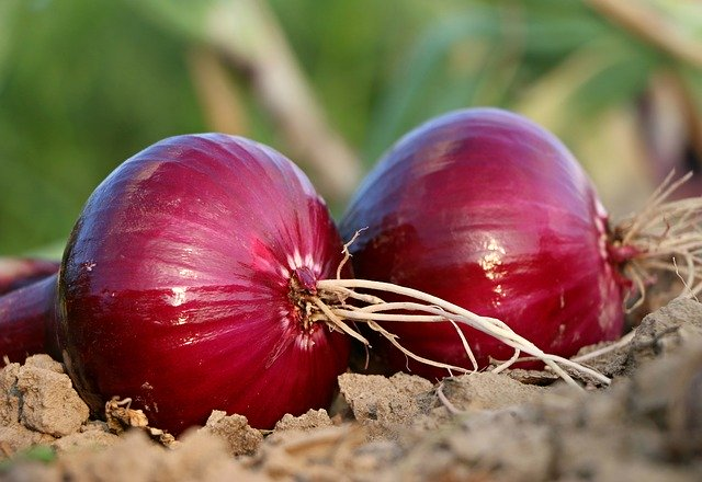 Bangladesh requested India to lift the ban on exporting onions