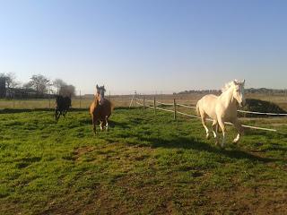 caballos al galop. Hípica Miraflores