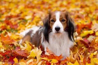 It's a brand new start to a brand new life - olin koiran omistaja 11 vuotta, 4 kuukautta ja 3 päivää.