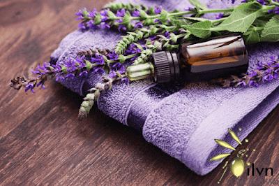 tinh dầu hoa oải hương từ pháp