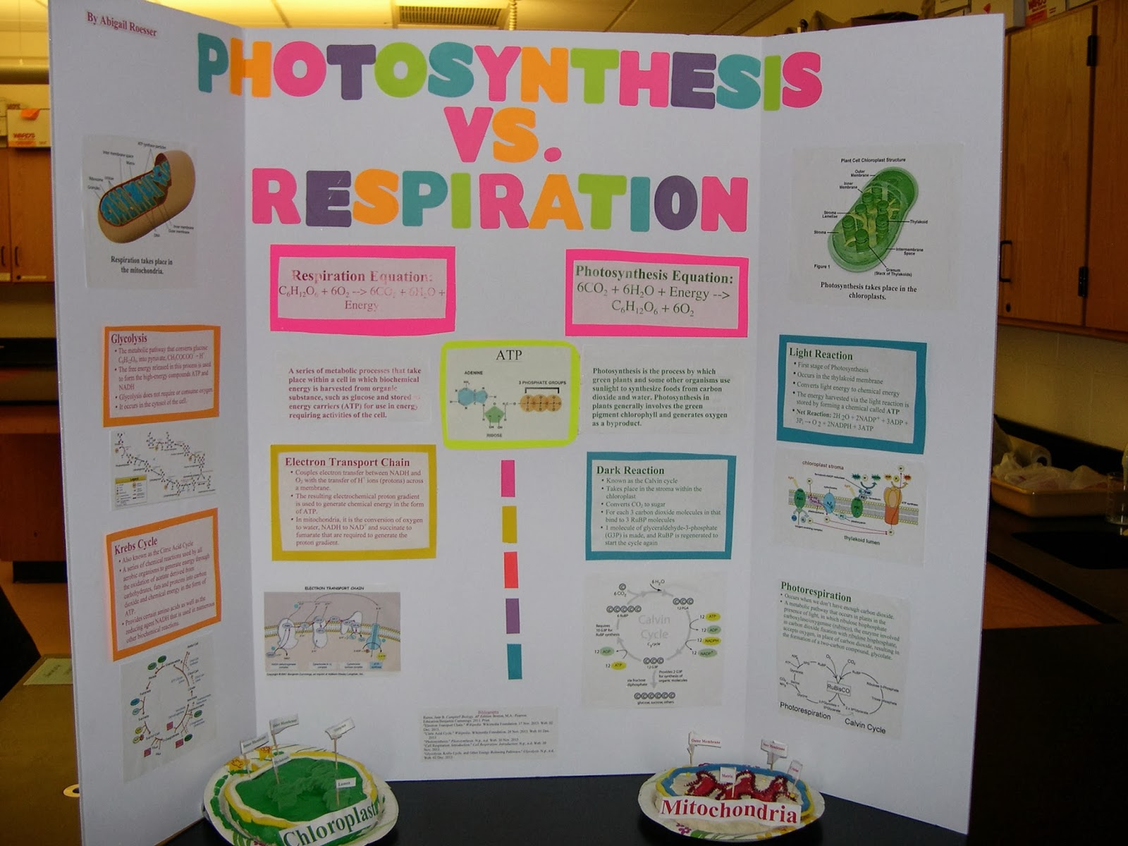 Bronxville Science Department AP Biology Cell Energetics